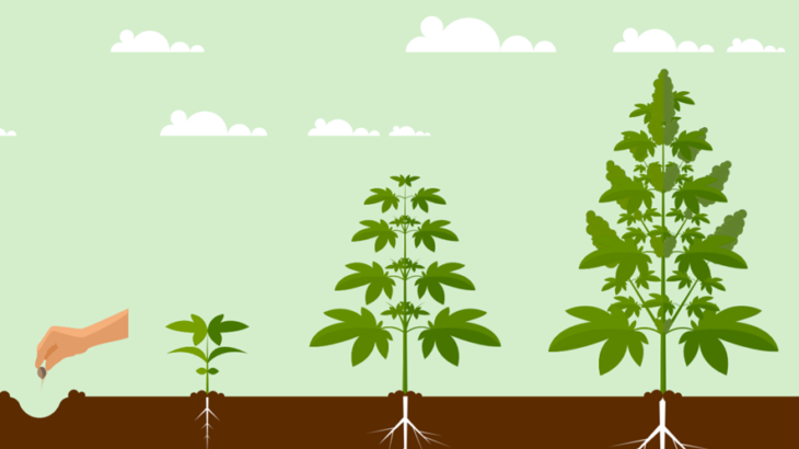 植物イメージ画像